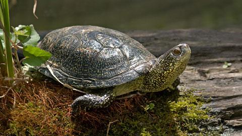 Riserva naturale del monte rufeno vt info turistiche for Tartaruga acqua dolce razze